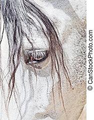 closeup, olho, cavalo branco, purebred, andalusian