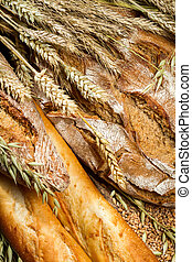 Closeup on a variety of bread with ears grain