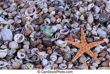 closeup on seashells and starfish