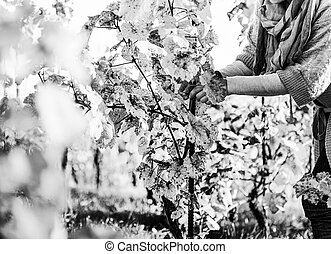 Closeup on young woman in vineyard caring for bushes