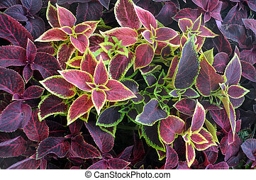 Closeup leaves of ornamental plants in the late summer.