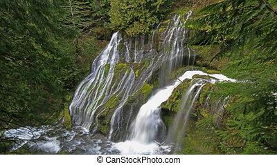closeup, panthère, 1080p, ruisseau, chutes