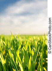 Closeup photo of fresh green grass