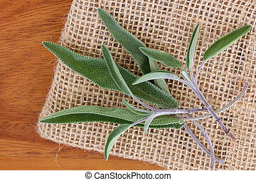 Closeup photo of fresh Sage leaves