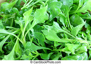 Closeup photo of Fresh Watercress