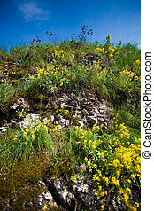 photo of grass and flowers growing on mountain