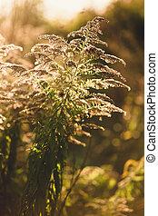 closeup photo of grass growing at autumn field