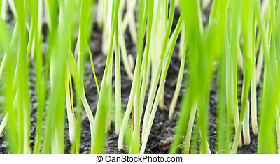 closeup photo of grass