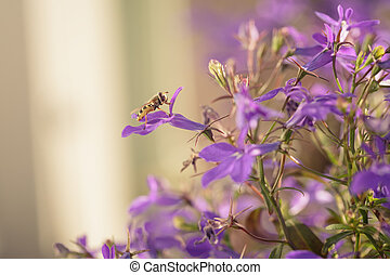 closeup photo of lobelia flowers with insect
