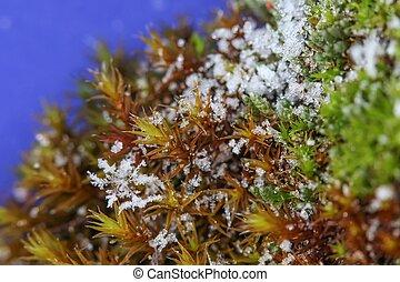 Closeup photo of snowflakes on moss