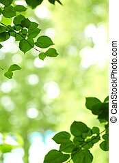 some fresh green leaves