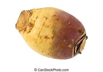 Turnip (Brassica rapa) - Closeup photo of Turnip (Brassica ...