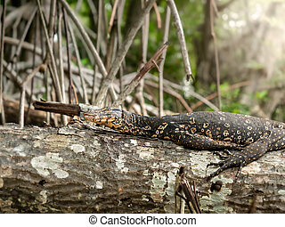 Closeup photo of varan sitting on the tree branch in ...
