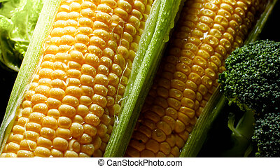 Closeup photo of water rain droplets on ripe sweetcorn ears. Background for healthy food and GMO free products.Diet nutrition and fresh vegetables. Vegan and vegetarian background.