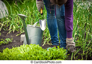 photo of woman watering salad bed with watering pot