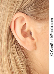 Closeup picture of blond girl ear - Color closeup picture of...