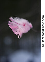 closeup pink feather