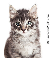 Closeup portrait black tabby kitten
