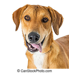 Closeup Portrait Happy Smiling Crossbreed Dog