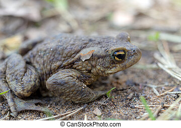 toad on the ground