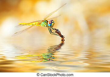Closeup portrait of dragonfly - Closeup portrait of a...