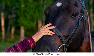 closeup pretty lady strokes horse face with hand by forest