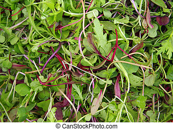closeup, sałatkowe ziele, pole, surowy, mieszany