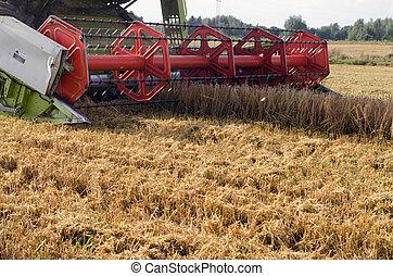 closeup, samenvoegen, oogsten, tarwe, landbouwkunde veld