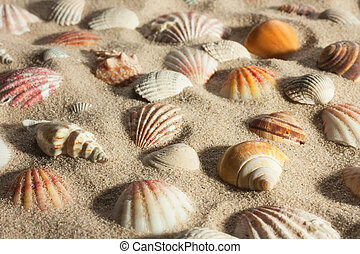 Closeup seashells sticking out of the sand in the sunlight