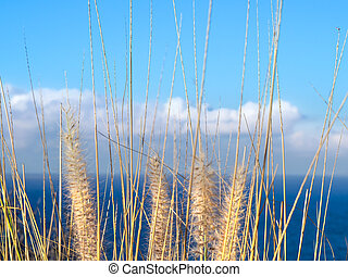 Closeup selective soft focus of beach dry grass, reeds, stalks blowing in the wind at blurred sea on background and blue sky