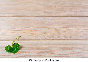 Closeup shamrock setup on rustic wooden background