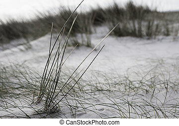 Closeup shot coastline in France with grass