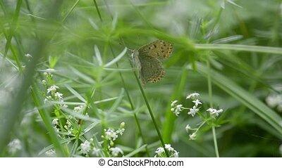 Closeup shot of a small butterfly climbing up a stalk -...