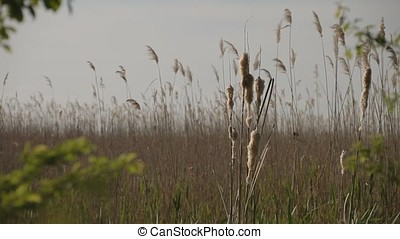 Closeup Shot of Cane in the Middle of Marsh