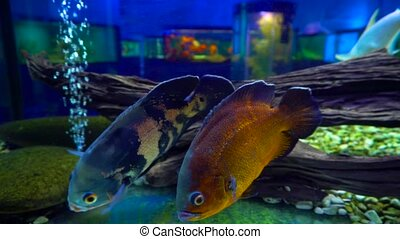 Closeup shot of fishes in water - Closeup shot of different...