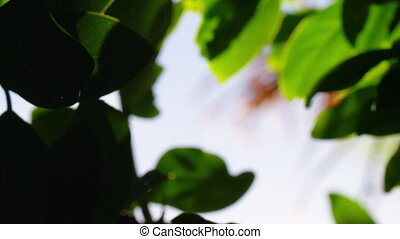 Closeup shot of leaves against the sky