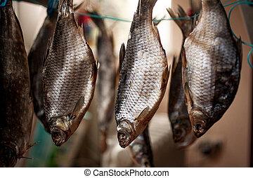 Closeup shot of salted bass drying on stick - Closeup photo ...
