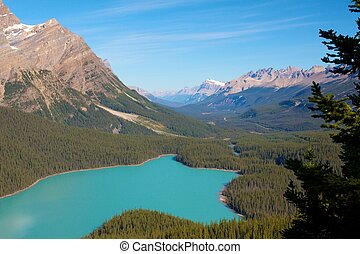 Closeup shot of the amazingly turquoise Peyto Lake in Canada