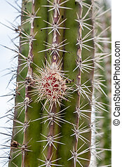 Spines closeup on a green cactus