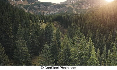 Closeup sun over pine trees forest at mountain aerial. Nobody nature landscape. Green fir woodland at mount ridges. Amazing autumn vacation to picturesque Carpathians mountain, Ukraine, Europe