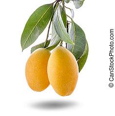 Closeup sweet Marian plum thai fruit isolated on white background (Mayongchid Maprang Marian Plum and Plum Mango, Thailand)
