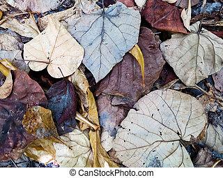 closeup, tiro, deteriorar, folhas