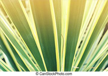 closeup, tropikalna roślina, liść, rocznik wina, tło