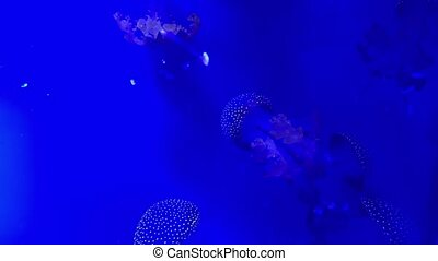 Closeup underwater video recording of swimming jellyfishes -...
