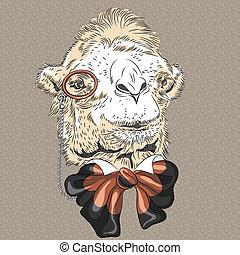 closeup, vektor, hüfthose, lustiges, porträt, kamel