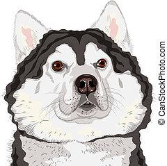 closeup, vetorial, cão, raça, malamute alasquiano, retrato