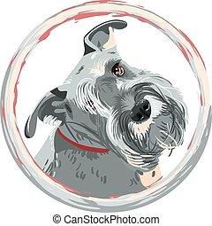 closeup, vetorial, miniatura, cão, schnauzer, raça