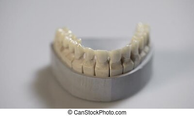 Closeup view at dental jaw model in laboratory - Dental jaw...