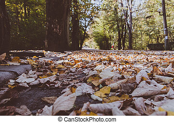 Closeup view of autumn dead leaves in a forest