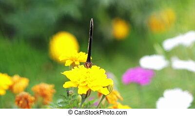 Closeup view of butterfly flower